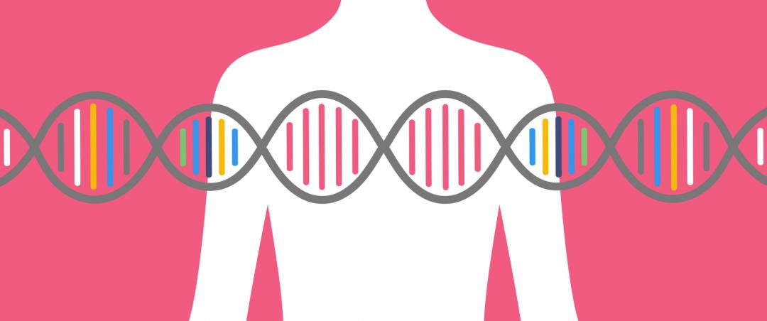 Genes BRCA 1 e 2: entenda a ligação com o câncer de mama